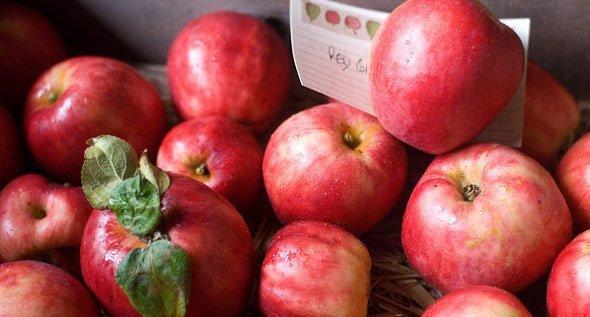 Правила разгрузочного дня на яблоках для беременных