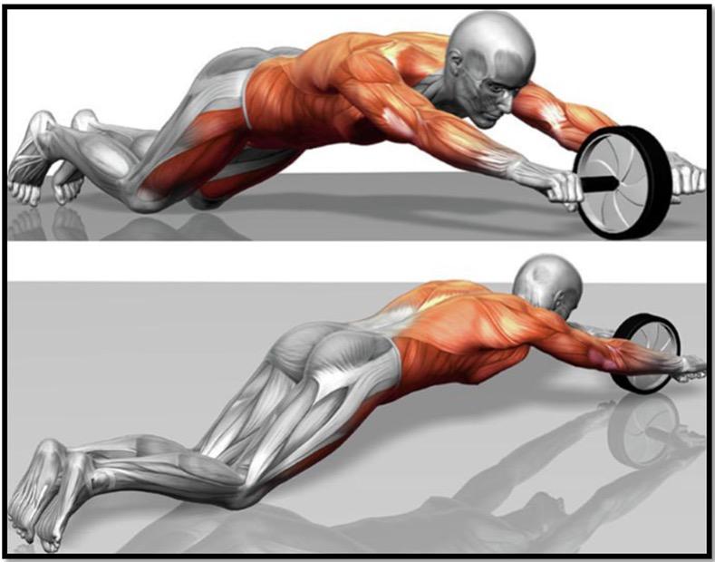 Комплекс упражнений с роликом
