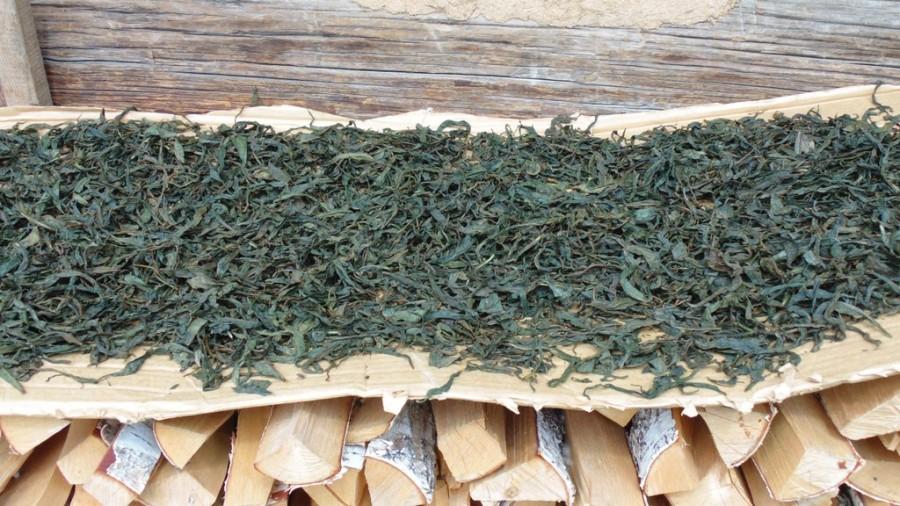 Как правильно заготовить: рекомендации по сушке иван-чая
