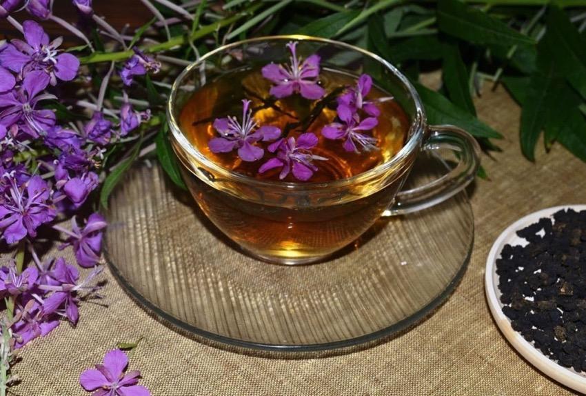 Как узнать, что иван-чай готов: окончание ферментации в домашних условиях