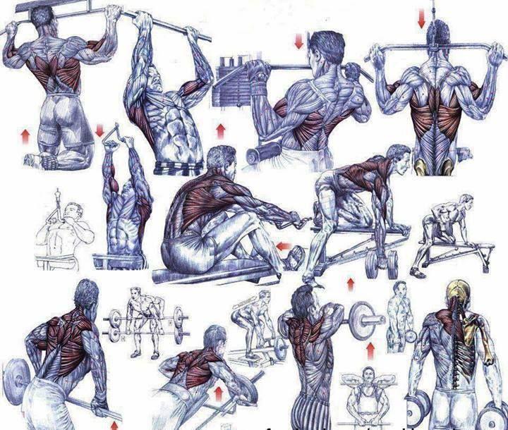 Особенности и основные моменты при составлении программы тренировки
