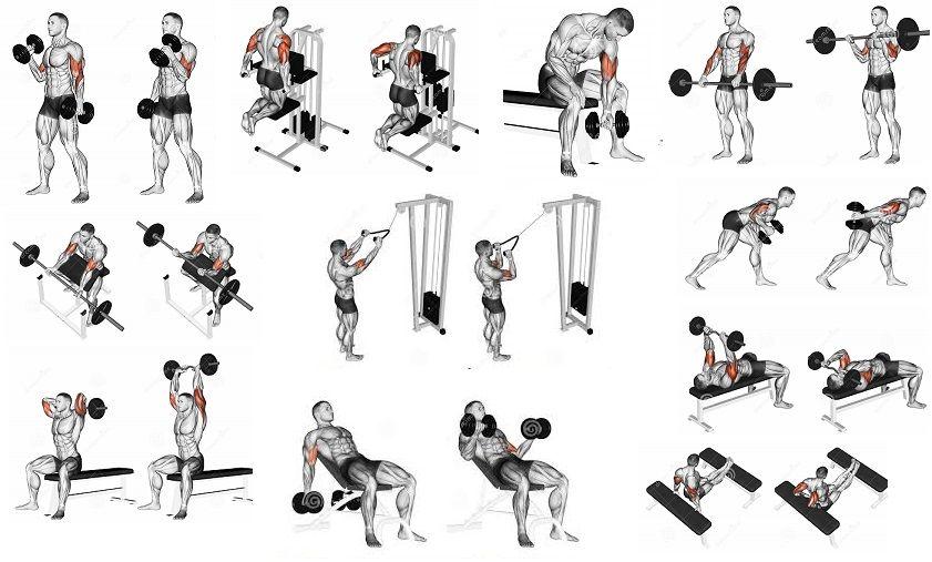 Какие упражнения входят в программу силовых тренировок?