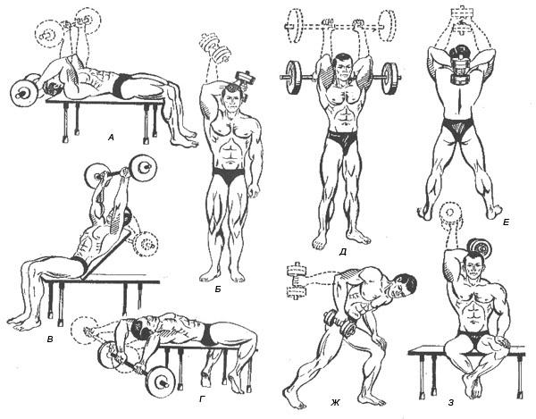 Какими упражнениями можно прокачать трицепс?