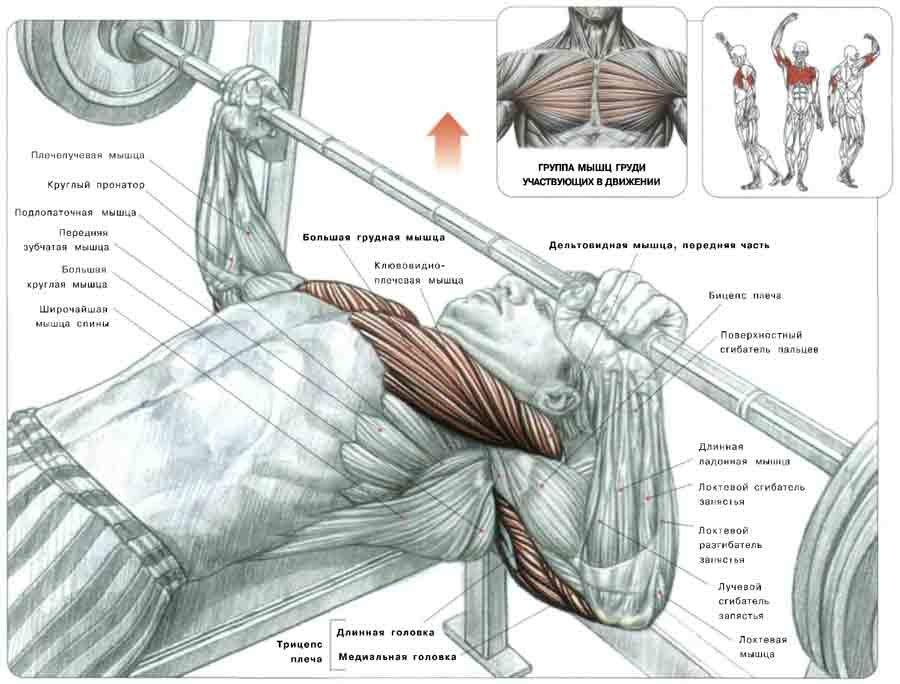 Что представляет собой жим лежа: какие мышцы тренирует?