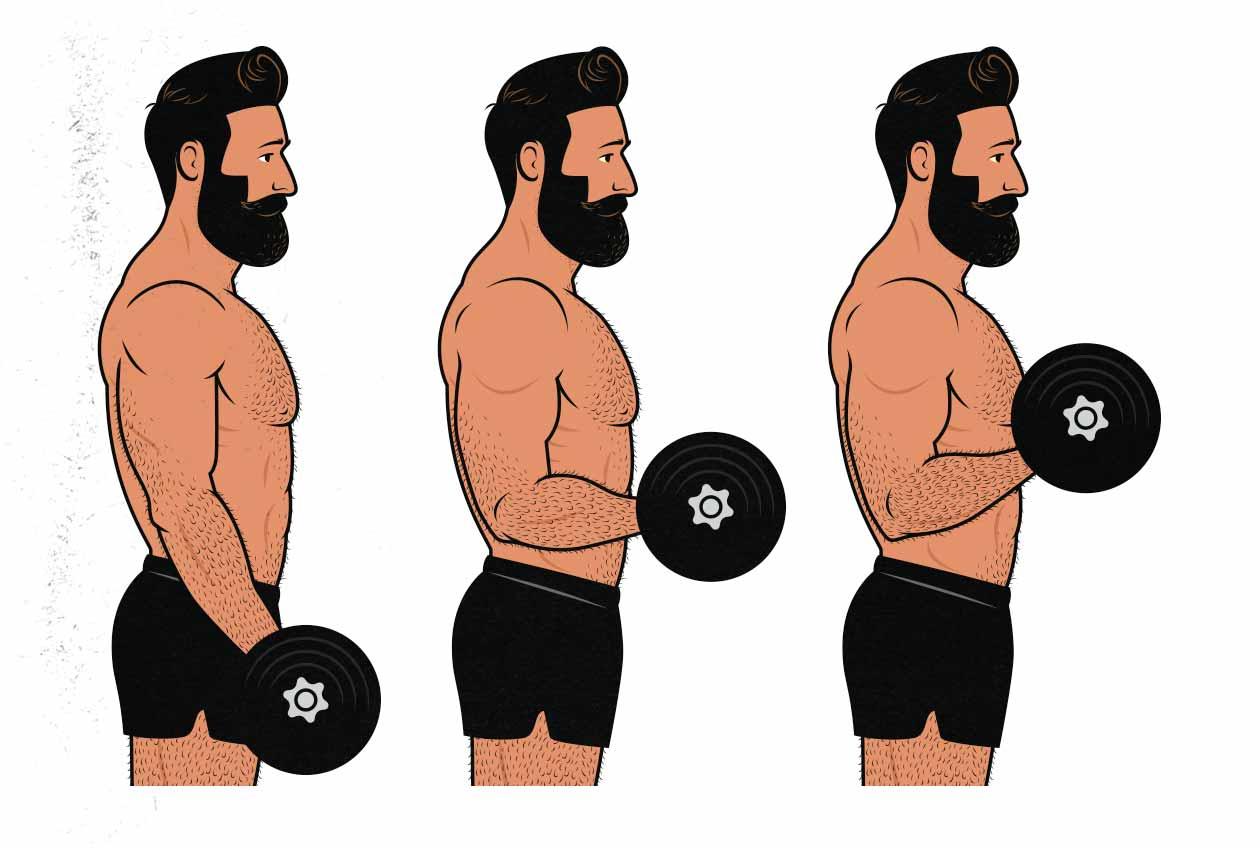 Базовые упражнения на бицепс