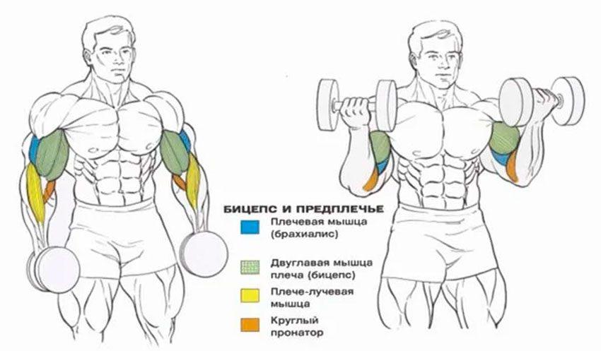 Какие мышцы участвуют?