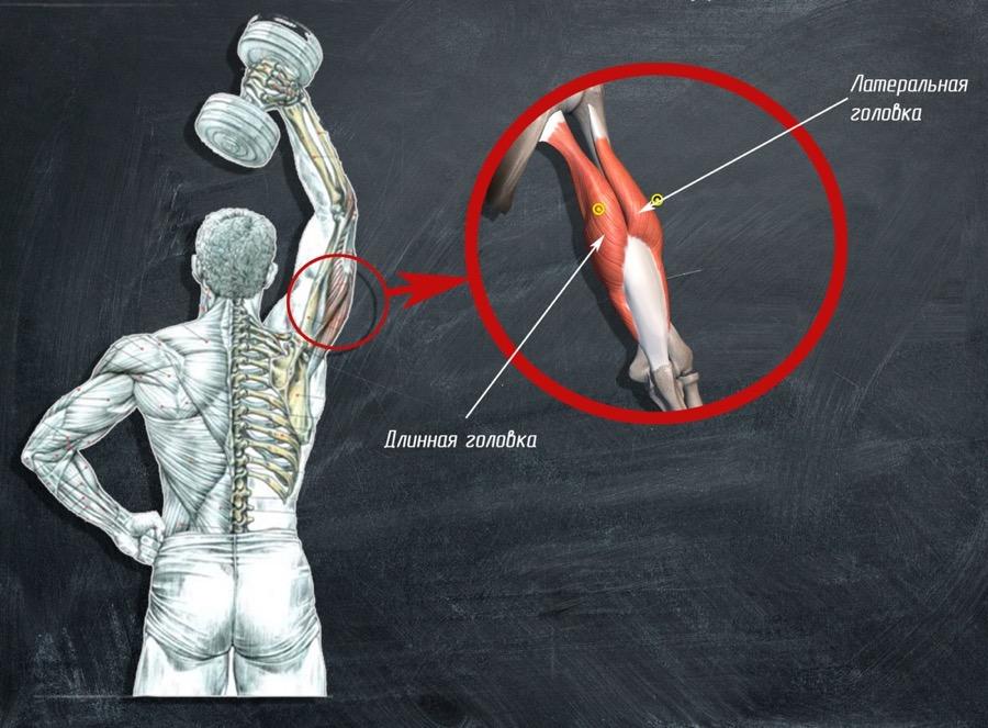 Упражнения на длинную головку трицепса